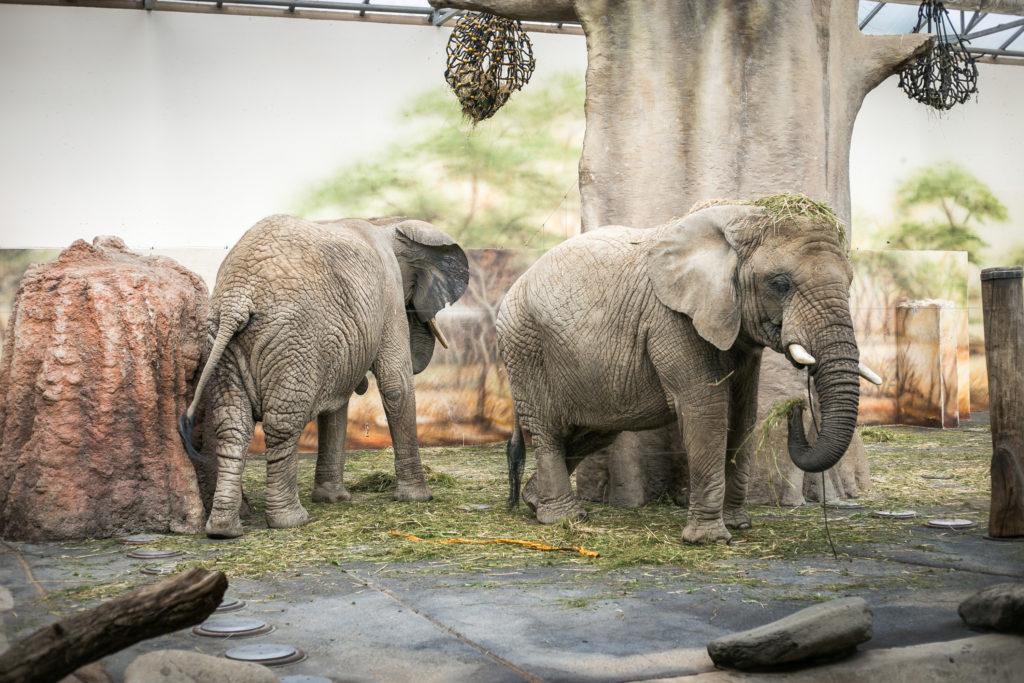 Zoo Safari w czeskim mieście Dvur Kralove