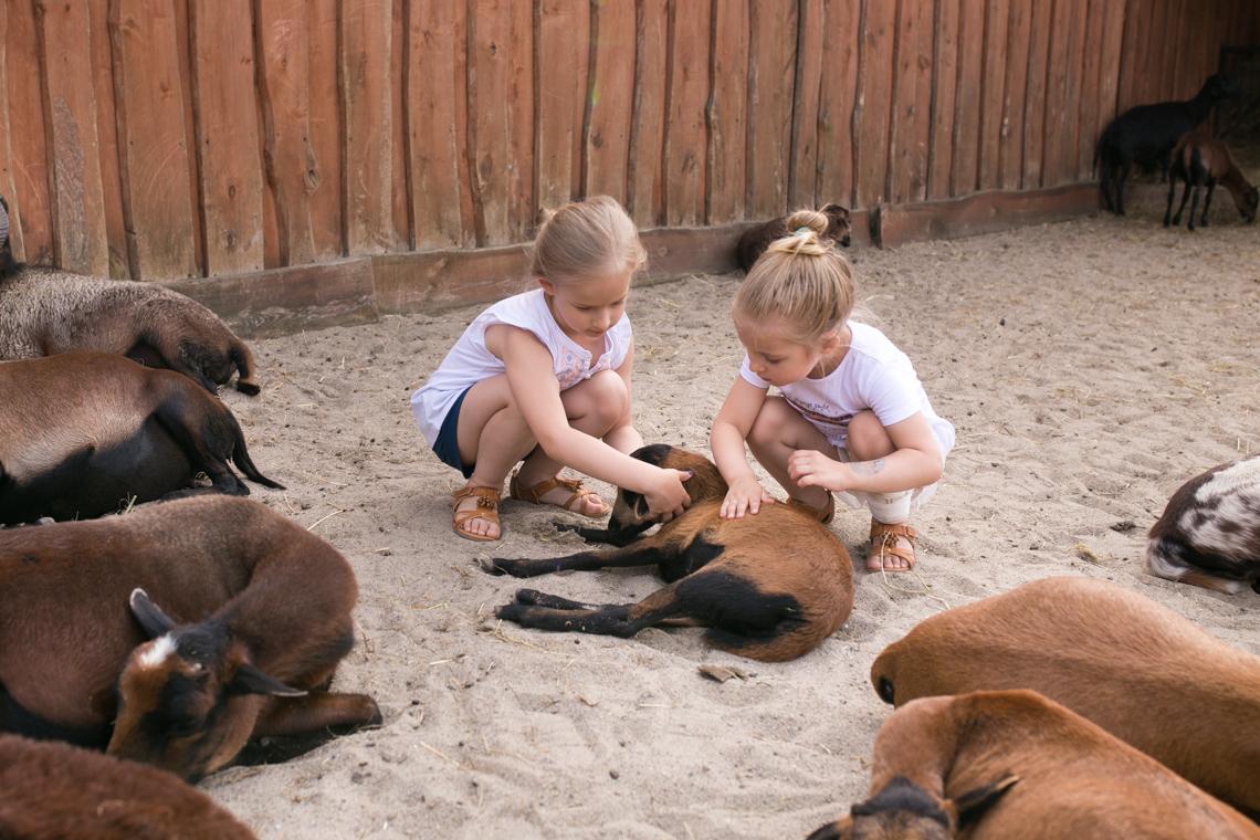 atrakcje dla dzieci w łodzi, zoo safarii w borysewie, wakacje w łodzi, zoo, zoo safari,