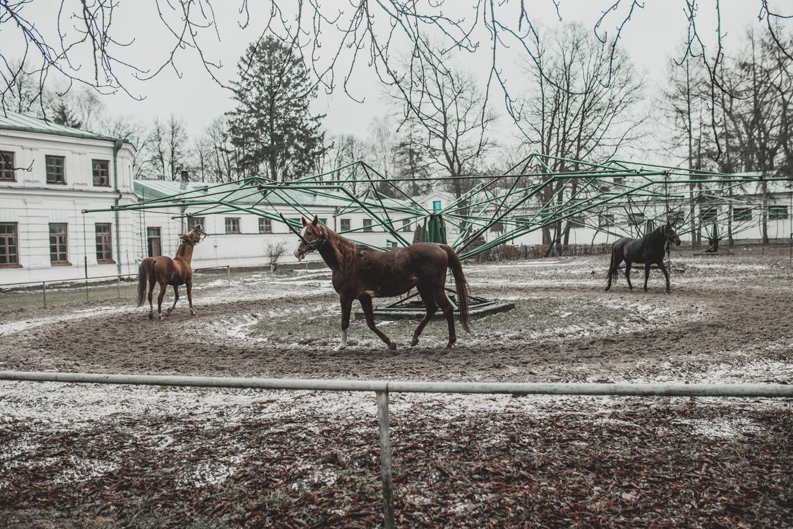 Podlasie dla dzieci, dwór droblin, mamagerka, co w polsce z dziećmi, janów podlaski konie, stadnina